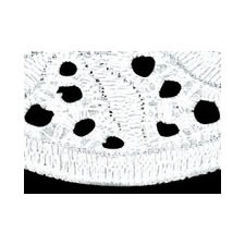 Broderie anglaise coton    122mm